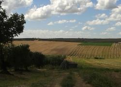 paesaggio8